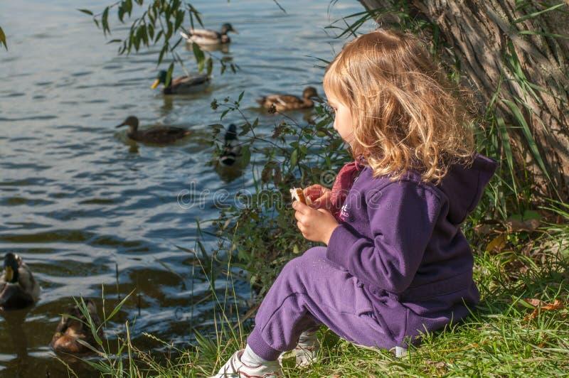 Una niña que se sienta en patos del lago de un lado y de la alimentación fotografía de archivo libre de regalías