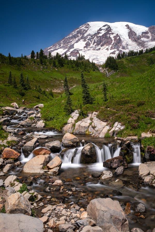 Una nieve capsuló la montaña, el Monte Rainier en el tiempo de primavera con un campo de wildflowers en el primero plano, y una c imagen de archivo libre de regalías