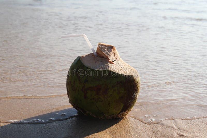 Una noce di cocco con paglia sulla spiaggia sabbiosa vicino al mare nel tempo soleggiato immagini stock libere da diritti