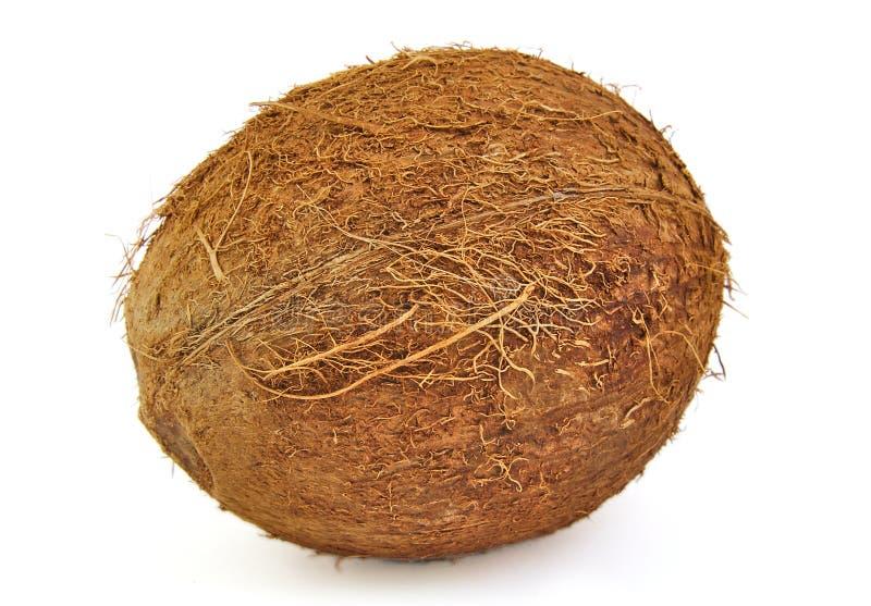 Una noce di cocco fresca su fondo bianco immagini stock