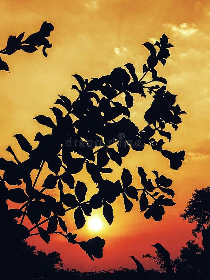 Una opinión brillante y hermosa de la salida del sol a través de ramas de árbol imágenes de archivo libres de regalías