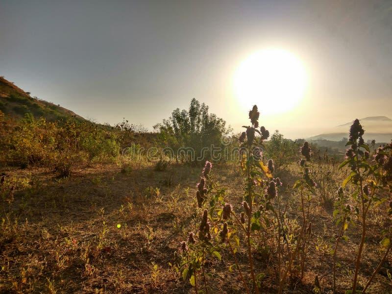 Una opinión de la mañana de plantas contra el sol foto de archivo