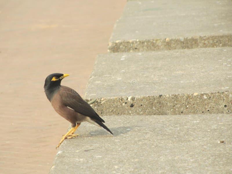 Una opinión el pájaro fotografía de archivo
