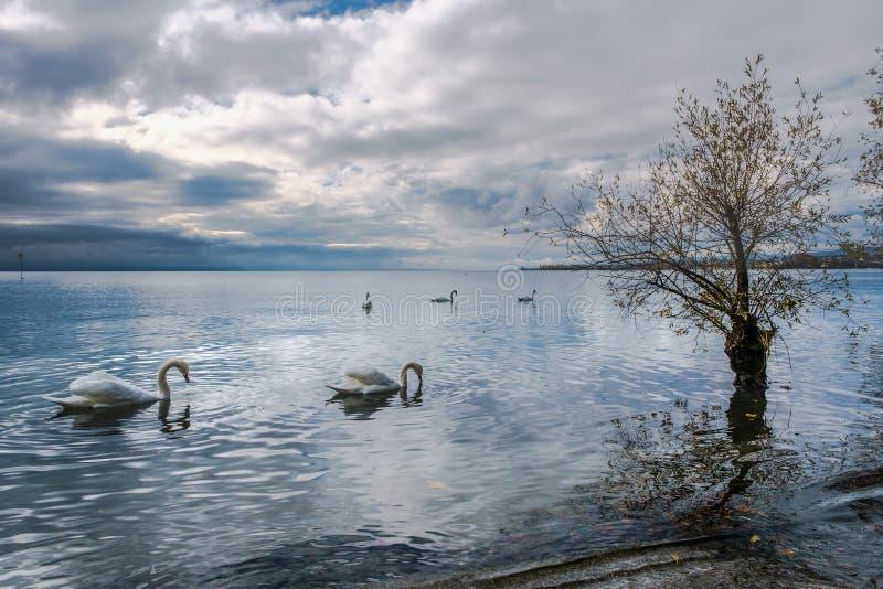 Una opinión sobre el lago Lemán de Preverenges, Suiza fotos de archivo libres de regalías