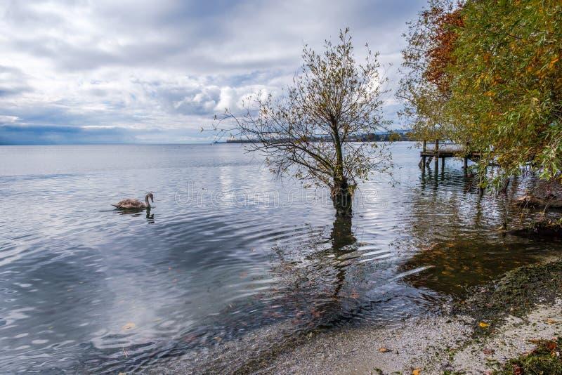 Una opinión sobre el lago Lemán de Preverenges, Suiza fotos de archivo