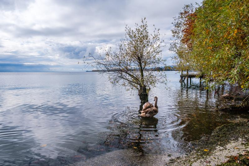 Una opinión sobre el lago Lemán de Preverenges, Suiza foto de archivo