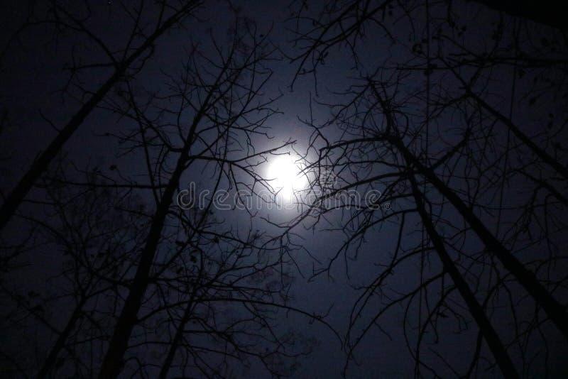 Una oscuridad del fullmoon en primavera fotos de archivo
