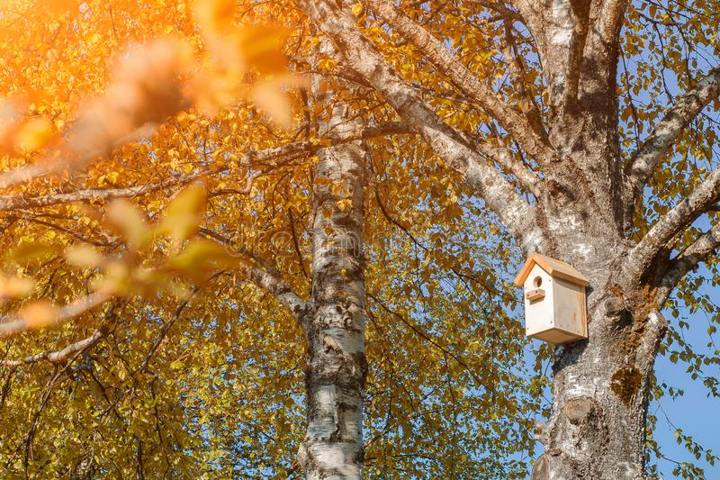 Una pajarera en un árbol de abedul con las hojas amarillas imagenes de archivo