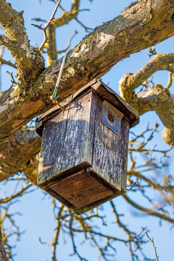 Una pajarera en un árbol en invierno imagen de archivo libre de regalías