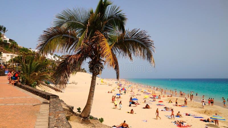Una palma in Playa del Matorral - una spiaggia esotica in Morro Jable, Fuerteventura, isole Canarie, Spagna fotografia stock