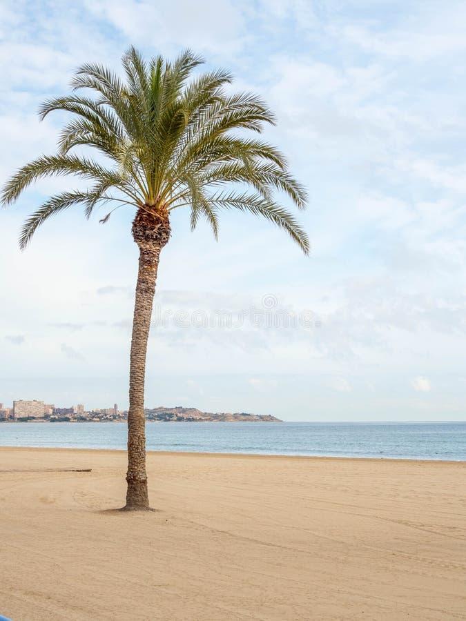 Una palma sola en la playa imágenes de archivo libres de regalías