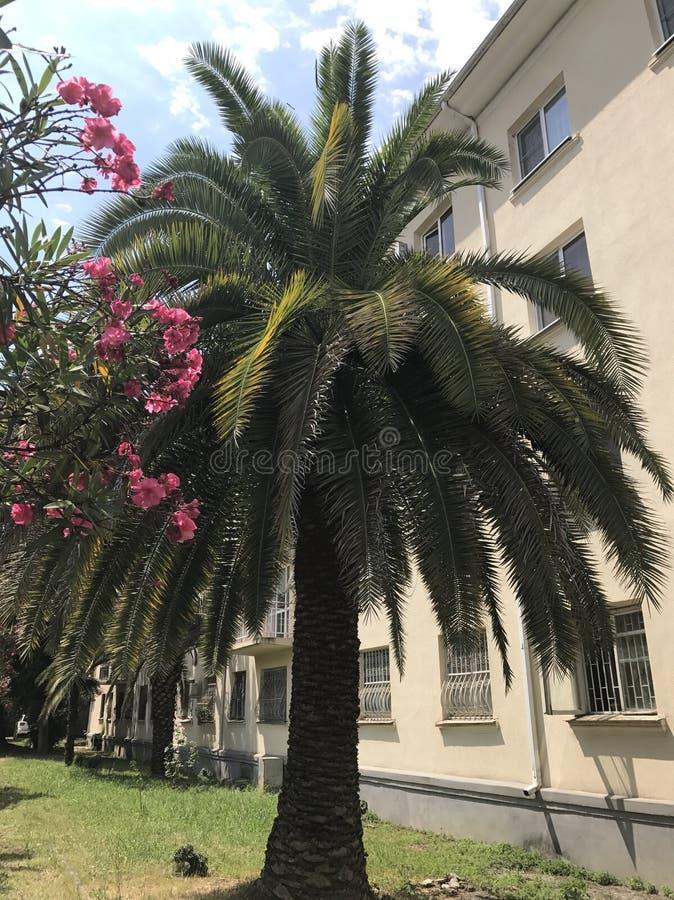 Una palmera y flores imagenes de archivo