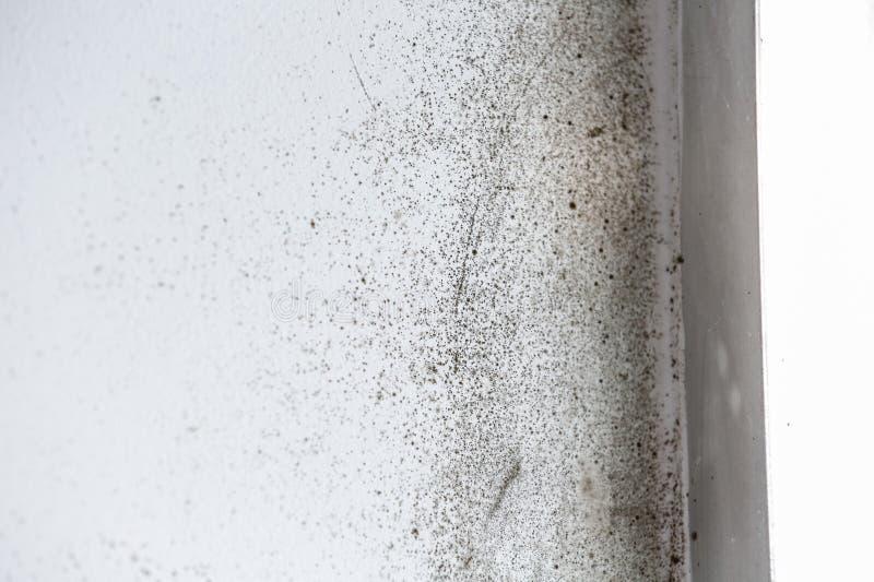 Una pared blanca peligroso mohosa imagen de archivo