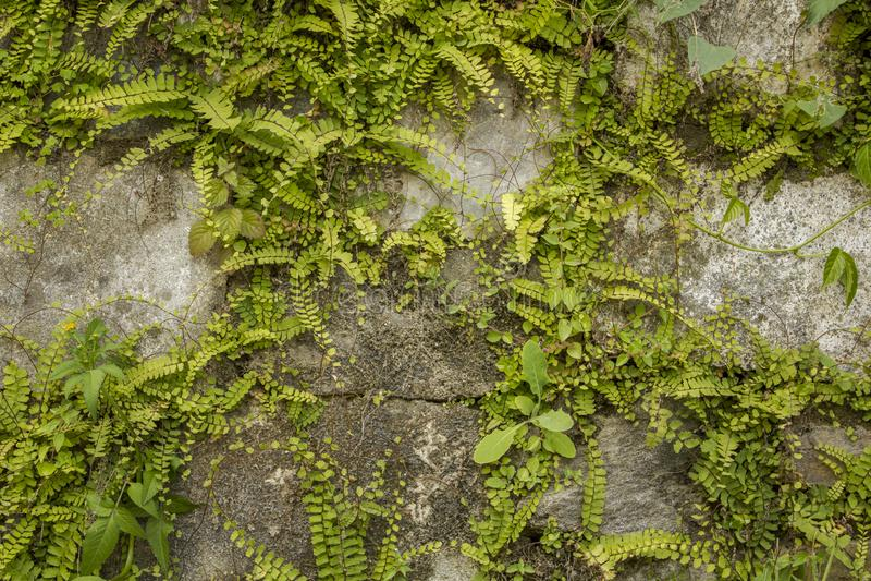 Una pared de piedras grises con la vegetación verde abundante Diseño del paisaje imagenes de archivo