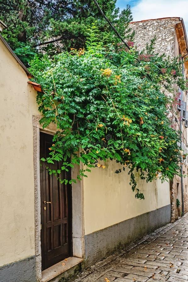 Una parete di pietra decorata con il campeggio e l'edera verdi è una porta marrone Inverdimento verticale delle città fotografie stock libere da diritti