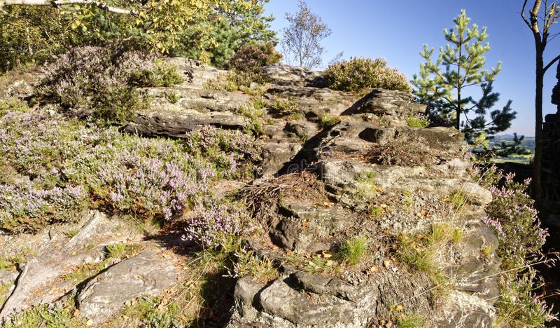Una parete enorme della roccia con i piccoli cespugli in determinate aree fotografie stock