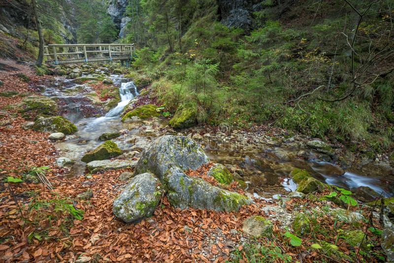 Una pasarela de madera sobre una corriente en un bosque fotos de archivo
