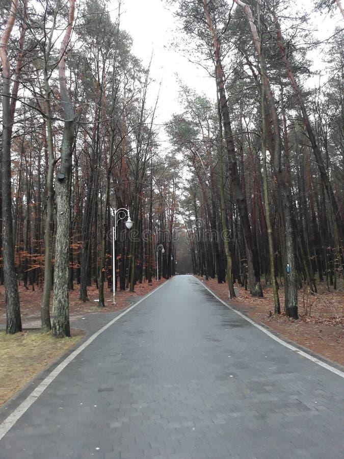 Una passeggiata attraverso il parco nella stagione delle pioggie fotografia stock