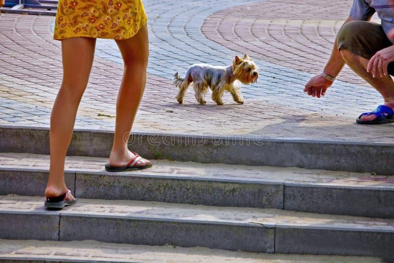 Una passeggiata con il mio cane fotografia stock libera da diritti