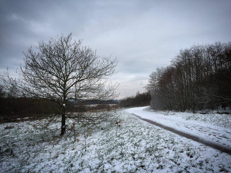 Una passeggiata di inverni fotografia stock