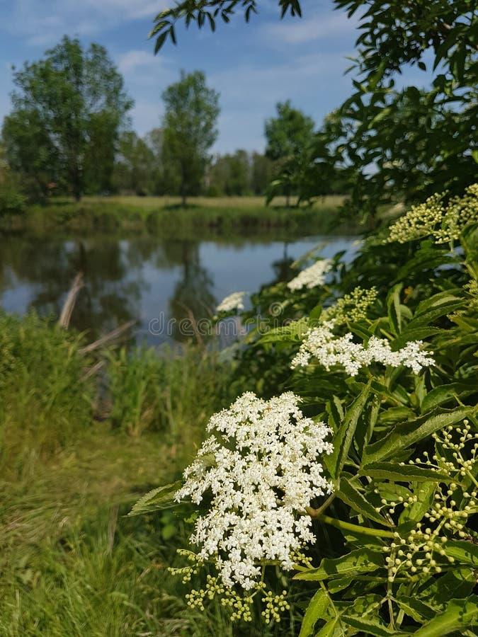 Una passeggiata nel lago fotografia stock libera da diritti