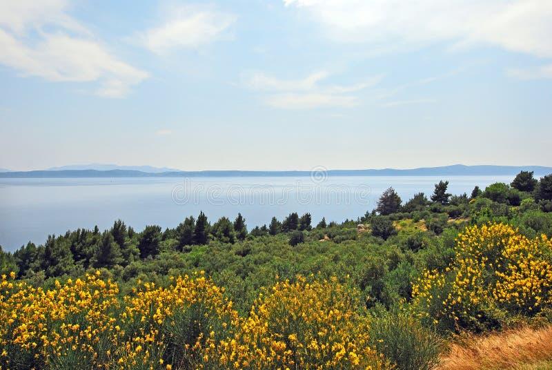 Una península en la costa de Croacia foto de archivo libre de regalías