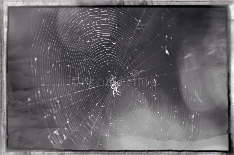 Una pequeña araña imagenes de archivo