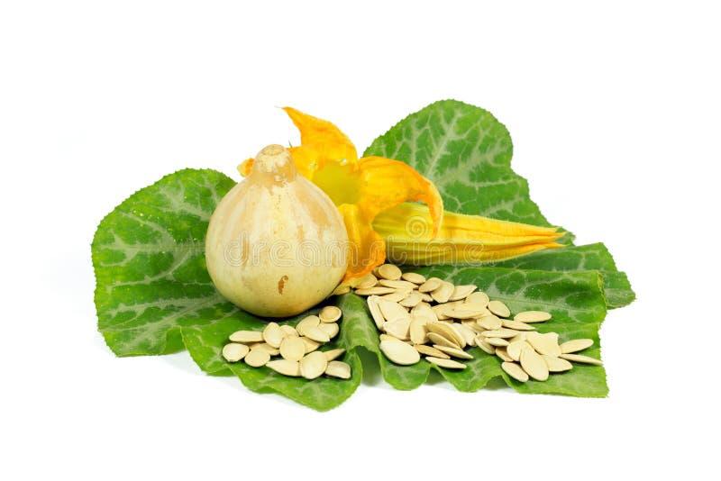 Una pequeña calabaza con las semillas amarillas de la flor y de calabaza en la hoja verde aislada en blanco imagen de archivo libre de regalías