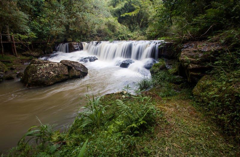 Una pequeña cascada en la selva de la provincia de Misiones de la Argentina imagen de archivo libre de regalías