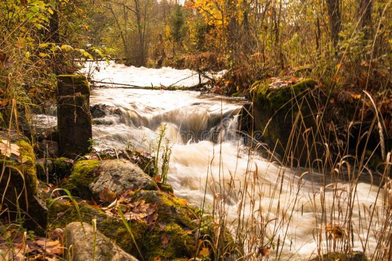 Una pequeña cascada en un bosque del otoño imágenes de archivo libres de regalías