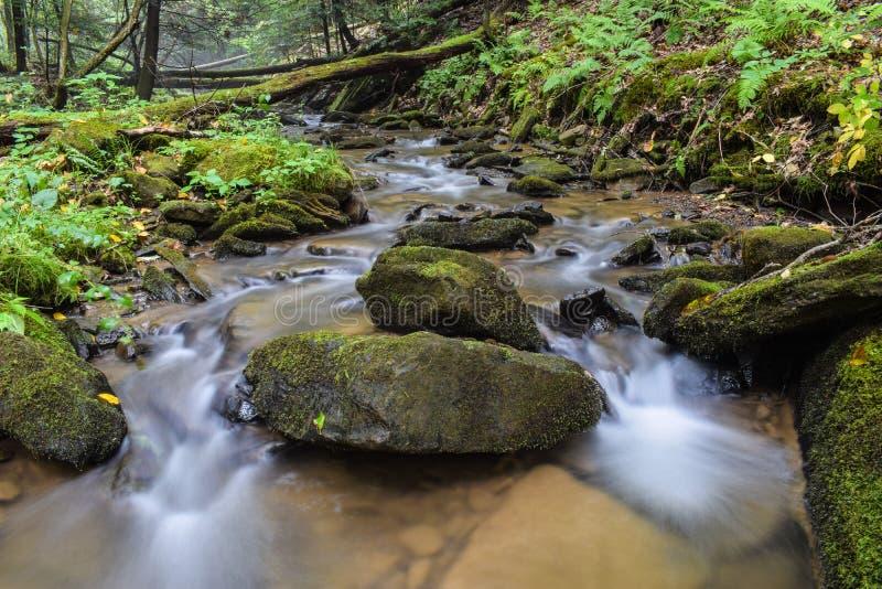 Una pequeña corriente de la trucha en las montañas apalaches foto de archivo