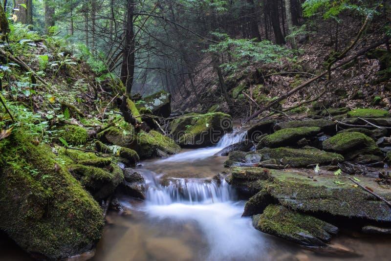 Una pequeña corriente de la trucha en las montañas apalaches imagen de archivo