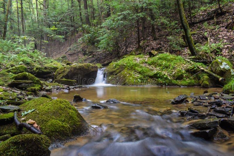 Una pequeña corriente de la trucha en las montañas apalaches imagenes de archivo
