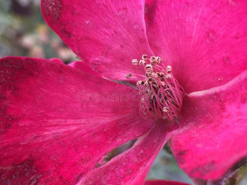 Una pequeña flor foto de archivo libre de regalías