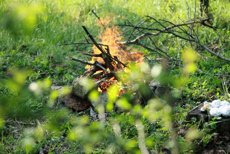 Una pequeña hoguera en un césped verde en el bosque se cría en el lugar incorrecto fotos de archivo libres de regalías