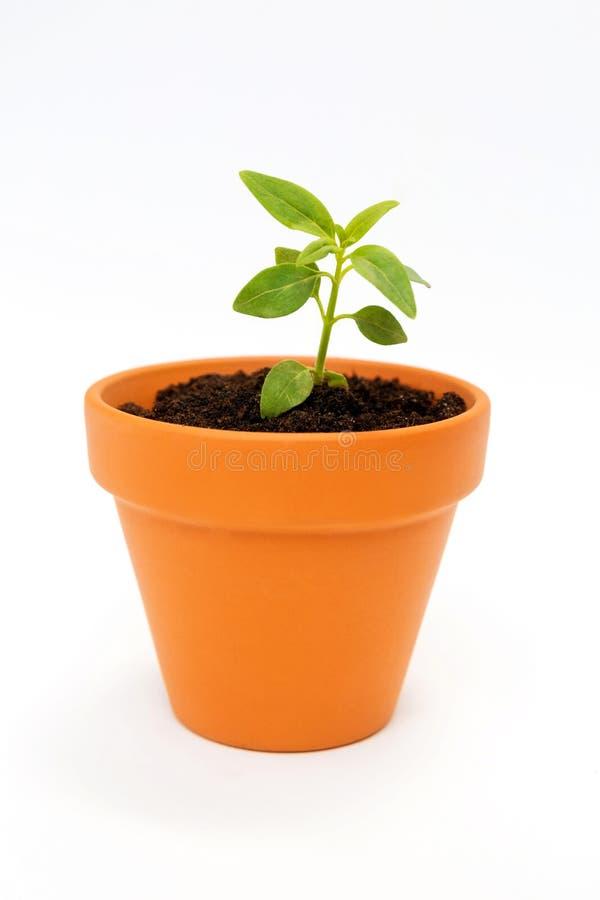 Una pequeña maceta y una planta verde fotografía de archivo