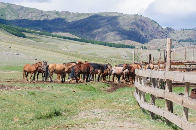 Una pequeña manada de caballos en corral imagenes de archivo