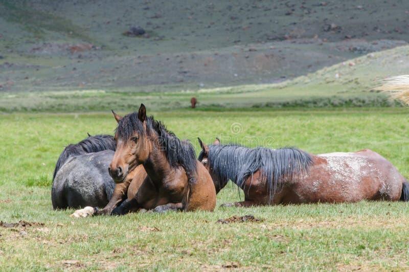 Una pequeña manada de caballos en corral fotos de archivo libres de regalías