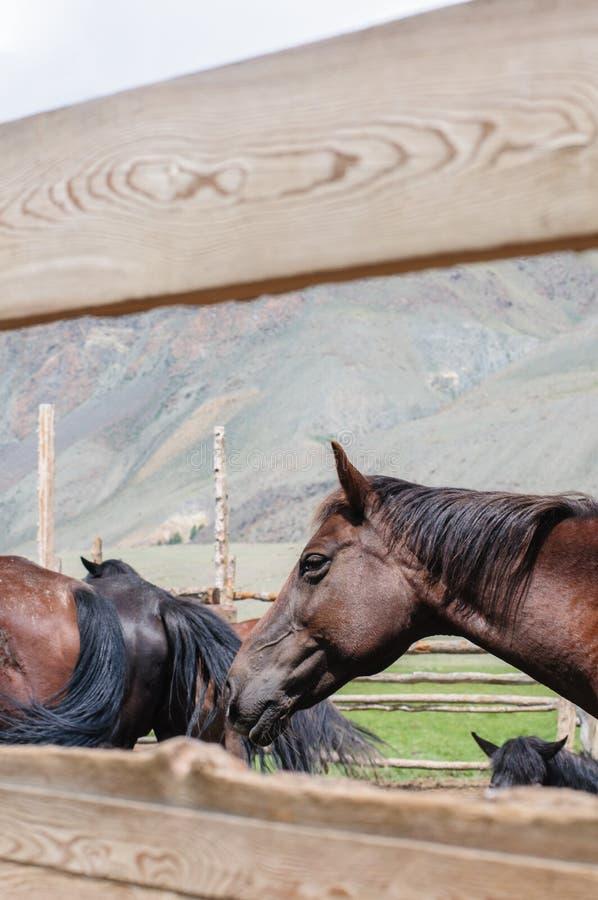 Una pequeña manada de caballos en corral fotografía de archivo