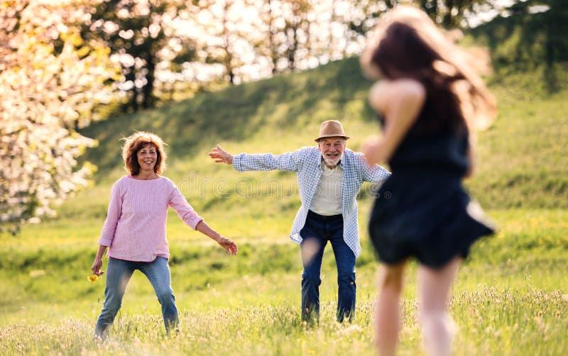 Una pequeña muchacha con los abuelos que corren afuera en naturaleza de la primavera fotos de archivo libres de regalías