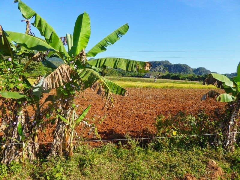 una pequeña palma en un campo en verano foto de archivo
