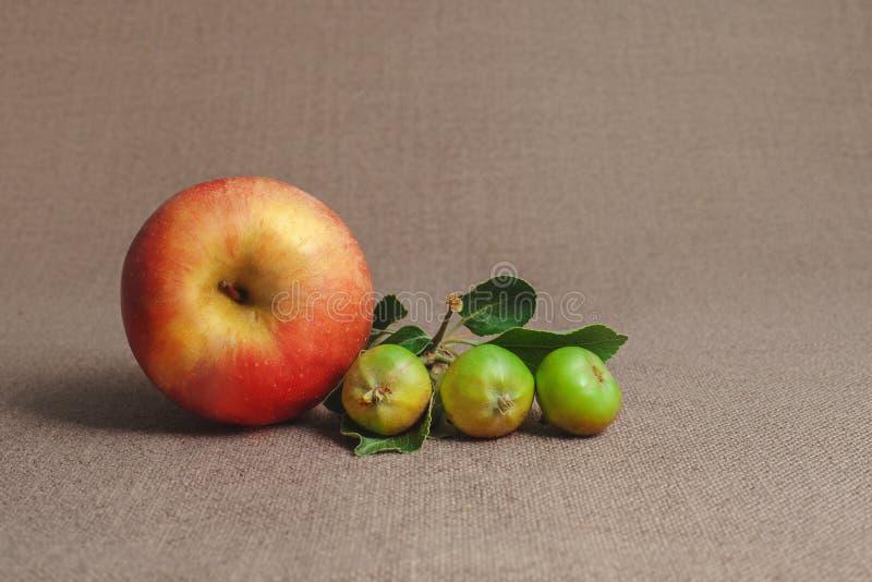 una pequeñas manzanas inmaduras rojas y tres verdes grandes imagenes de archivo