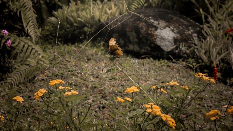 Una perca de la mariposa en tallos de flor fotos de archivo libres de regalías