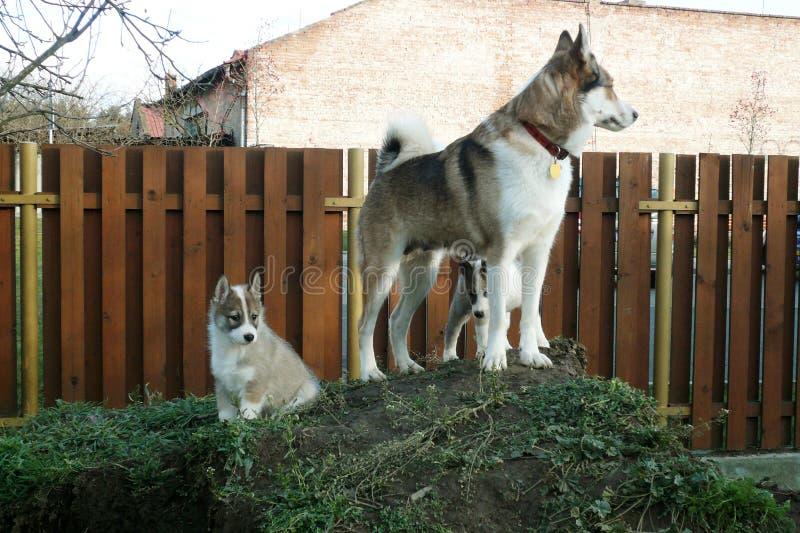 Una perra y su perrito imagenes de archivo