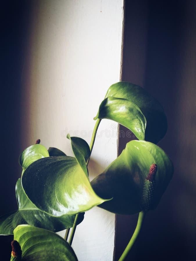 Una pianta è unica in sé fotografia stock libera da diritti