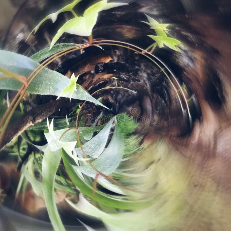 Una pianta è unica in sé immagine stock