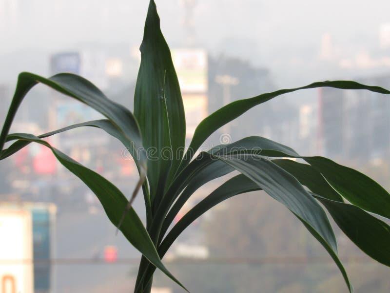 Una pianta immagini stock