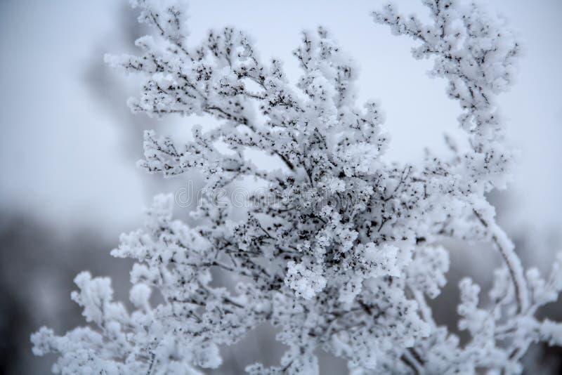 Una pianta congelata coperta di gelo fotografia stock