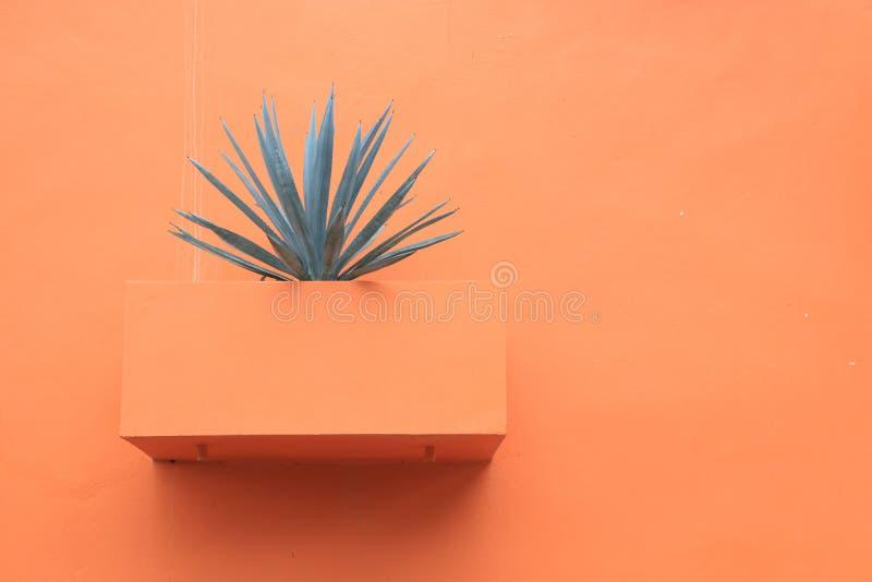 Una pianta della vera dell'aloe fotografia stock libera da diritti