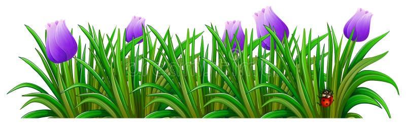 Una pianta di fioritura con i fiori viola illustrazione vettoriale